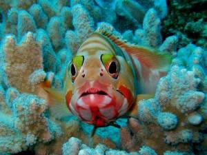 Подводные фотографии Кении