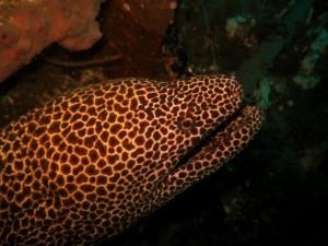 Дайвинг в Кении, подводные фотографии