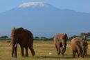 «Увидеть Килиманджаро»